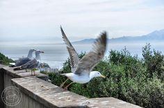 Gibraltar - planeta małp - STARYM FORDEM PRZEZ EUROPĘ