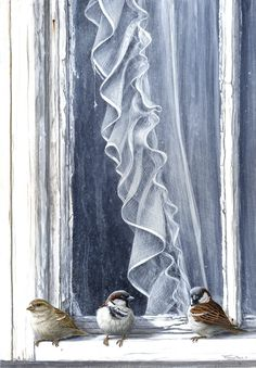 lace curtain sparrows by Jeremy Paul