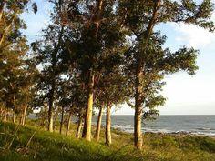 Punta Espinillo. Dpto. de Montevideo