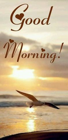 Good morning pictures - A wonderful day. Just a shame that you are not here Good morning greetings - Good Morning Photos, Good Morning Love, Good Morning Flowers, Good Morning Friends, Good Morning Messages, Good Morning Video, Good Morning Wishes Gif, Beautiful Good Morning Wishes, Goog Morning