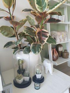 Plantssss