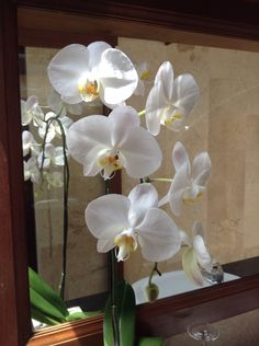 White orchid White Orchids, Bali, Pride, Tropical, Plants, Flora, Plant, Gay Pride, Planting