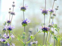 My Wild Flowers/ Photography by breathofanangel on Etsy, $15.00