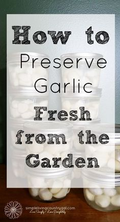 Garlic Cloves from the Garden Enjoy+fresh+garlic+year+round+with+this+easy+step+by+step+guide.++via+ Garden Hanging Garden, Hanging garden, or Hanging Gardens may refer to: Preserving Garlic, Preserving Food, Freeze, Classic Kitchen, Container Gardening, Vegetable Gardening, Gardening Tips, Sustainable Gardening, Sustainable Living