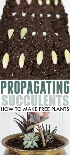 Propagating Succulents, Propagation, Free Plants, God Loves Me, Diy Projects, Garden, How To Make, Garten, Lawn And Garden