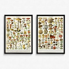 Both spectacular renderings of mushrooms, champignons, funghi, and more in one value-priced set. Save!