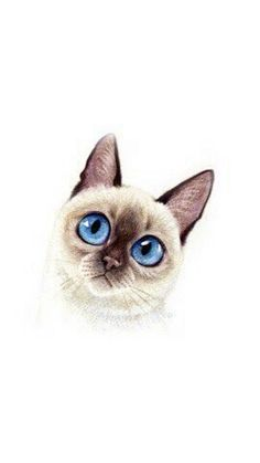 Owl, Bird, Cats, Pattern, Animals, Gatos, Animales, Animaux, Owls