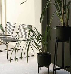 Grouped series of Zenith Planters - They are the ideal accessory to help give a space and edge. #planter #modern #black #style #interior Outdoor Chairs, Dining Chairs, Outdoor Decor, Modern Furniture, Outdoor Furniture, Dark Horse, Planters, Black Style, Interior