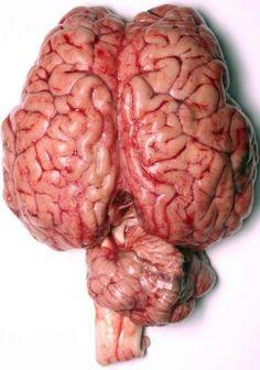 Memory & the Brain - The Human Memory