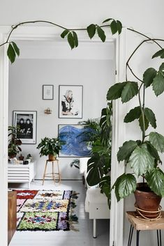Interior trend alert: boucherouite rugs cosy дом, интерьер и Plantas Indoor, Turbulence Deco, Decoration Plante, Interior Decorating, Interior Design, Design Art, Scandinavian Home, Indoor Plants, Dream Homes