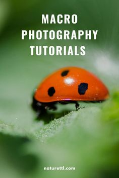 A selection of macro photography tutorials to help you improve your macro photos of all things small, from bugs to close-ups of leaves. Photography Composition Rules, Implied Photography, Wildlife Photography Tips, Photography Basics, Photography Tips For Beginners, Underwater Photography, Photography Tutorials, Amazing Photography, Photography Ideas