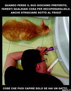 Quando perde il suo giochino Cute Cats And Dogs, Animals And Pets, Cats And Kittens, Verona, Funny Cats, Funny Jokes, Simons Cat, Cat Lovers, Dog Cat