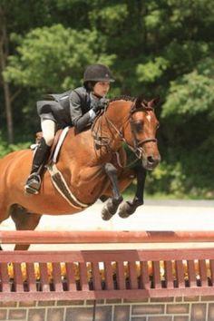Sweet Treat - Dutch Warmblood - Pony Hunter for sale on Bigeq.com