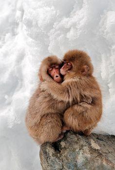 "Juvenile Japanese Macaques.  Ethan Lim, Singapore (source). """
