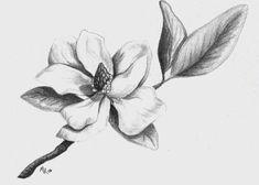 Flor Magnolia, Magnolia Branch, Magnolia Flower, Cute Tattoos, Flower Tattoos, Southern Tattoos, Pencil Drawings, Art Drawings, Flower Drawings