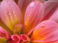 Enjoy the stunning collections of wallpapers with a variety of exclusive wallpapers on flowers. Flower wallpapers are best suited for resolution of 1024 by Find more flower wallpaper collection New Flower Wallpaper, Garden Wallpaper, Beautiful Flowers Wallpapers, Beautiful Wallpaper, Pink Petals, Pink Flowers, Bouquet Flowers, Flower Vases, Flower Arrangements