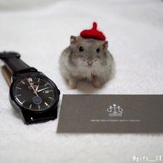2017.09.16 @loborjapan (http://lobor.jp/)様から、 時計いただきました(^^) . 黒が似合う人間になりたいので、 オールブラックでかっこいい こちらの時計を選びました! . 少し重みはありますが、 全然嫌な感じはなく どんな服装にも合いそうです . 10%割引のクーポン頂いてます☺️ コード:gift__08 . #lobor #ロバー #時計 #腕時計