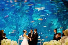 Redondo, Manhattan Beach, Long Beach, Palos Verdes: Host your wedding on the beach, in a botanic garden, at a luxurious cliffside resort... (See prices!) Venue Pictured: Aquarium of the Pacific Long Beach, CA City Wedding Venues, Inexpensive Wedding Venues, Unique Wedding Venues, Wedding Locations, Unique Weddings, Destination Wedding, Wedding Photos, Wedding Destinations, Wedding Tips