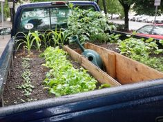 Truck bed gardens...maybe I should try this in the old truck Ricky has down in the bottom (area at the end of his property)