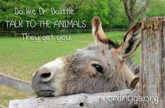 Do like Dr. Doolittle. Talk to the animals. They get you. - Sandra Galati :: wordhugs.org