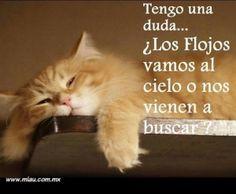 Imagenes de gatitos con frases positivas
