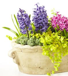 Petite Spring presence  When you've got a small plant, using it in a tabletop container lets you bring it to eye level where it can be better appreciated. Here, hyacinths take the spotlight. Placing them up close means you can appreciate their fragrance better, too.  Related Links  So-Easy Succulent Container Gardens  Easy Tabletop Water Gardens  Create a Magical Miniature Garden