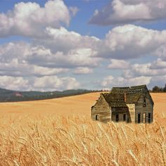 wheat fields and old farm house. Old Buildings, Abandoned Buildings, Abandoned Places, Abandoned Farm Houses, Old Farm Houses, Fields Of Gold, Wheat Fields, Old Barns, Farm Life