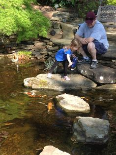 Kids LOVE to feed the fish! Pond Waterfall, Fish Ponds, Waterfalls, Porches, Koi, Pools, Jackson, Relax, Nursery