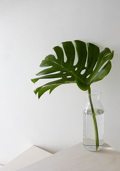 To Decorate With Modern And Tropical Statement Leaves Monstera