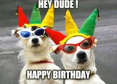 Happy Birthday Memes with Funny Cats Dogs and Cute Animals - Happy Birthday Funny - Funny Birthday meme - - Funny Dog Birthday Meme: Hey Dude! Happy Birthday The post Happy Birthday Memes with Funny Cats Dogs and Cute Animals appeared first on Gag Dad. Happy Birthday Dog Meme, Cat Birthday, Animal Birthday, Happy Birthday Wishes, Funny Birthday, Birthday Quotes, Birthday Memes For Men, Cute Animal Quotes, Cute Animals
