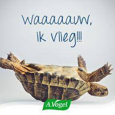 Een optimistische kijk op de wereld is toch gewoon het leukste, niet ;)?! #lavieenrose #optimisme #vliegen #schildpad