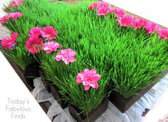 Wheat Grass Centerpieces (Grown on Paper Towels). . . so freakin cool.  Gonna have to remember this for Easter next year.
