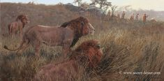 LOST TRACK   Not Just Wildlife Art of John & Suzie Seerey-Lester