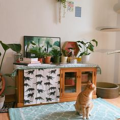 vintage / room / small / livingroom / cat / wall / plants / rugs / frame / storage closet / books / home / decor / interior / wall hangings / ideas / styling / comfy