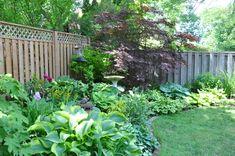 Three Dogs in a Garden: A Shade Garden in Oakville, Ontario Green Garden, Shade Garden, Garden Plants, Japanese Painted Fern, Hydrangea Quercifolia, Hosta Gardens, Heuchera, Foliage Plants, Shade Plants
