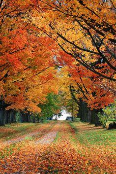 """Autumn Colors"" - photo by Donald Luo, via in Canada Fall Pictures, Fall Photos, Autumn Scenes, Autumn Aesthetic, Autumn Cozy, Fall Wallpaper, Autumn Photography, Hello Autumn, Autumn Inspiration"