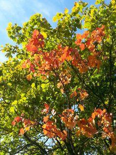Autumn arriving
