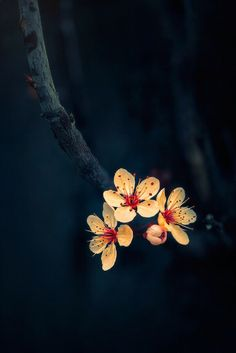 """scent-of-me: """" """"And the day came,when the risk to remain in a bud,was more painful than t.risk it took to blossom. Flower Wallpaper, Nature Wallpaper, Wallpaper Backgrounds, Flowers Nature, Beautiful Flowers, Beautiful Pictures, Imagen Natural, Foto Picture, Spring Blossom"""