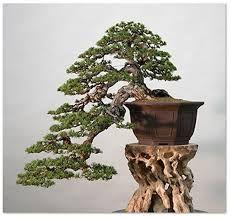 cascade bonsai ile ilgili görsel sonucu