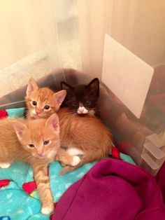 Cats Who Were Abandoned As Kittens Now Help Other Animals Feel Safe