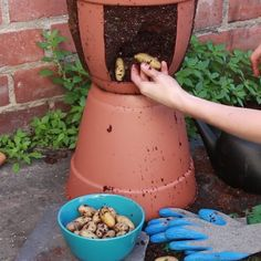 Easy Harvest Potato Planter - easiest potato farming I have seen!Try this easy harvest potato planter from when you want a green thumb!Easy Harvest and planting Potatoes in a fit home made Potato PlanterYou gotta try this DIY potato planter for small Veg Garden, Edible Garden, Garden Plants, Vegetable Gardening, Planting Vegetables, Balcony Garden, Planting Potatoes, Gardening Hacks, How To Plant Potatoes