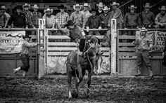 Rodeo in Durango, Colorado, USA. by Thierry Baertschiger  The rule of thirds is seen in this image by the fences. The spectators are out of focus but the rider and horse are but are both a bit blurry because of a slower shutter speed or a high ISO.