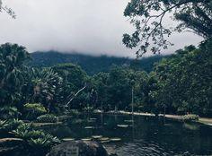 Views on the Jardim Botanico in Rio de Janeiro!!! #LucalRio #JardimBotanico #RJ #RiodeJaneiro #Rio #Brazil #Brasil #Errejota #Lindo #Lights#View #Coast #Pordosol #Vacation #Picoftheday #Sun #Sky #Tropical #Cidademaravilhosa #Daylight #Beachlife #Sunrise #Naturalbeauty #Yus #Carioca #Party #Cariocas #View #Views #Nofilter  Source: @diogosilvamonteiro