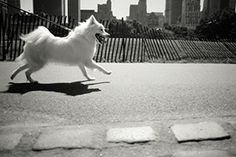 Dog etiquette- Dogs in the city. Dog Runs, White Dogs, Dog Care, Dog Training, Fur Babies, Your Dog, Horses, Urban, Pets