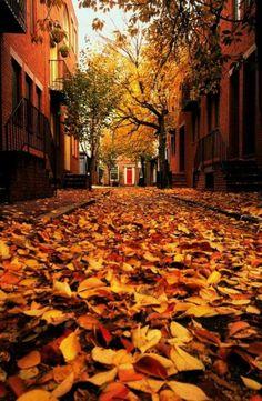 Fall beauty.