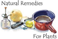 Homemade Fertilizers, Pest and Disease Remedies