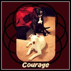 lizardmarsh: #Houston #TX: 3-13-18 Urgent. Courage the 5-month-...