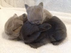 Cute Bunny Pictures, Funny Animal Pictures, Bunny Bunny, Baby Bunnies, Bun Bun, Buns, Cute Baby Animals, Funny Animals, Dwarf Bunnies