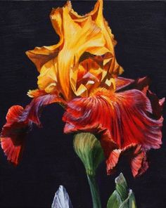 Flower Paintings by Sarah Caswell |Summer Smile Toffee