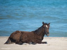 Resting Foal by Eve Turek.